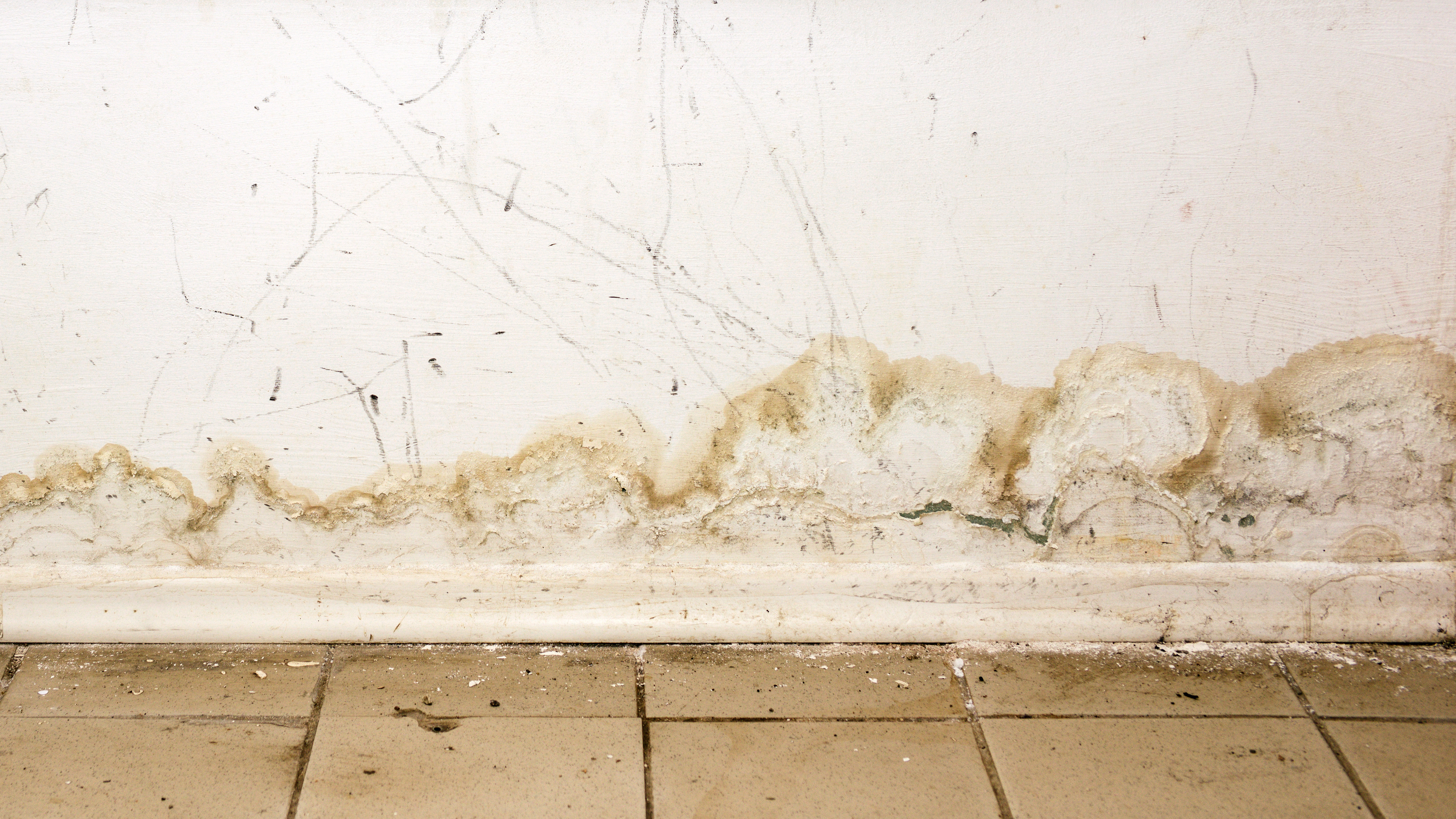 Here's Why You Should Perform a Mold Inspection After Water Damage