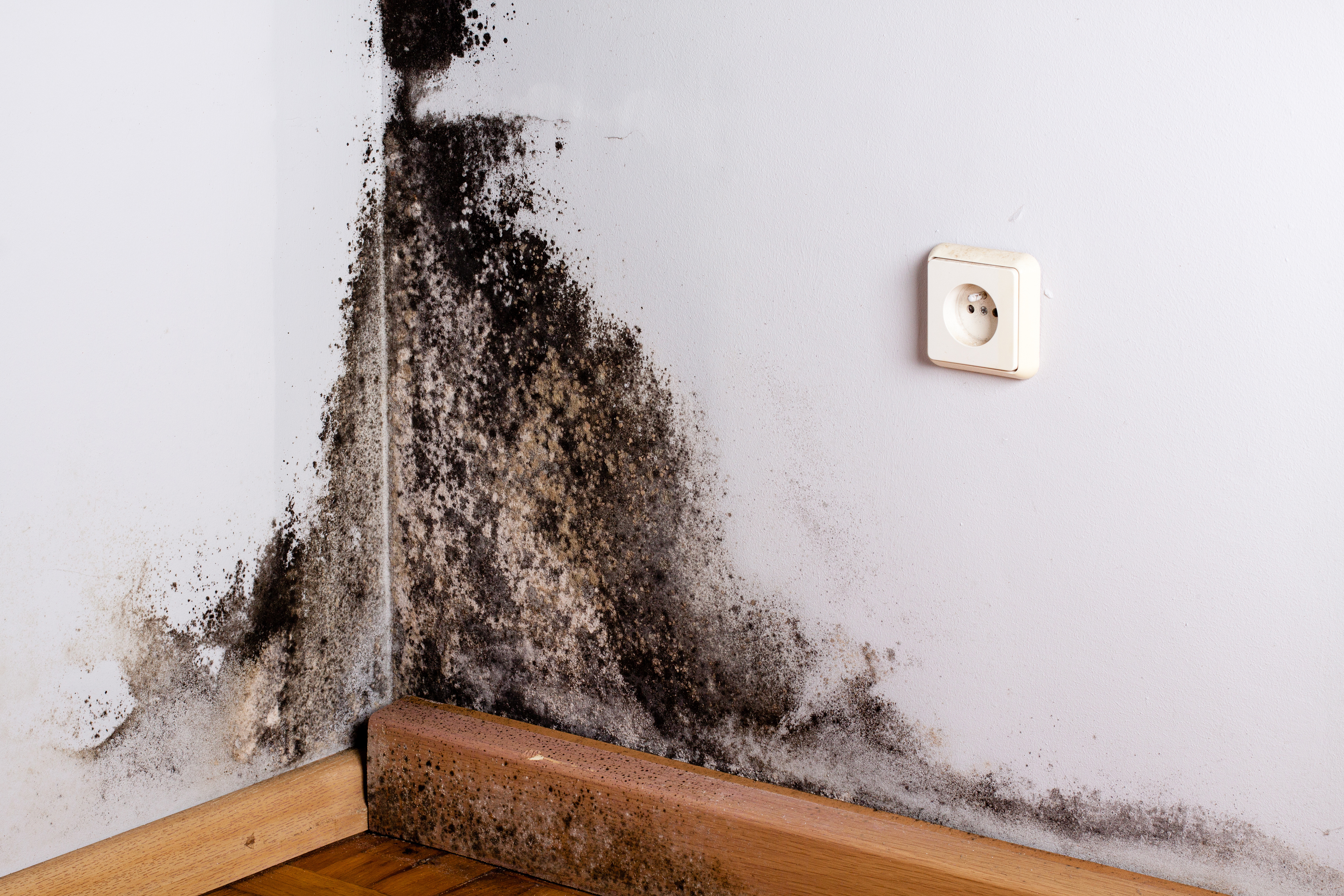 What's the Difference Between Mold & Mildew?