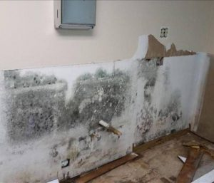 Home wall covered in mold