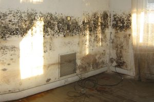 Wall covered in mold caused by water damage