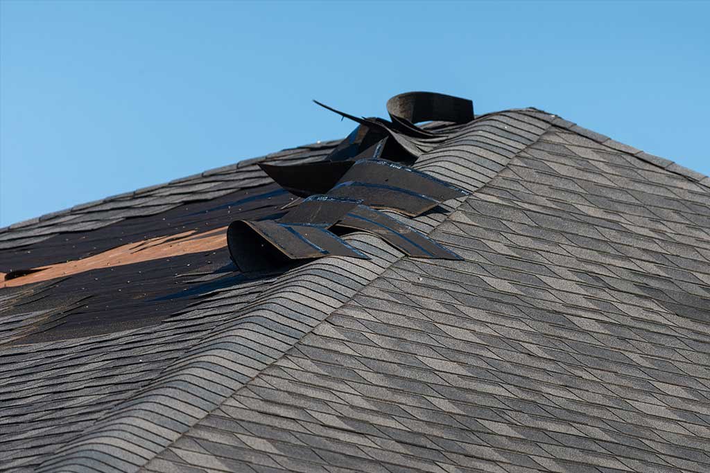 Curled shingles from wind damage