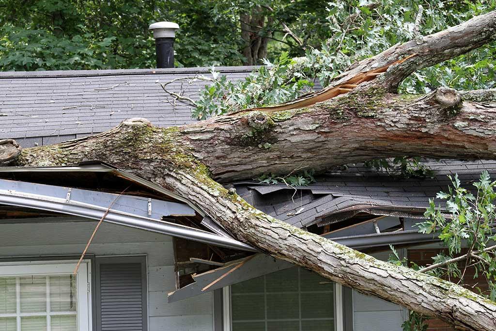 Fallen tree on roof from wind damage