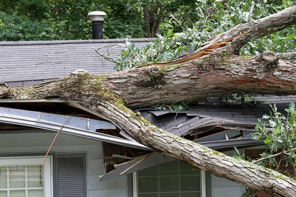 Fallen tree on roof causing roof to collapse
