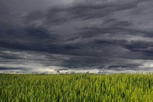 Storm over a field