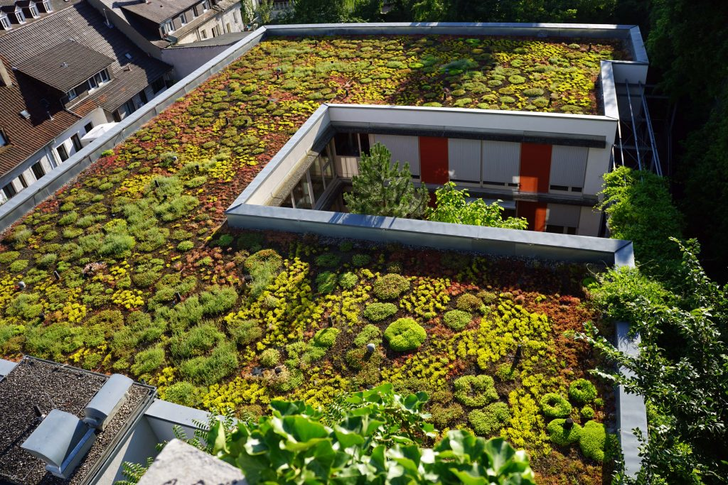 Birds eye view of a green roof
