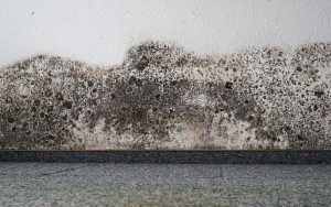 How to prevent carpet mold